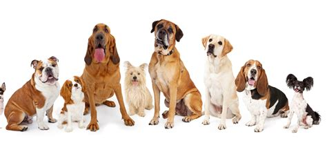 Why  Ee  Dog Ee    Ee  Breeds Ee   Arent Considered Separate Species