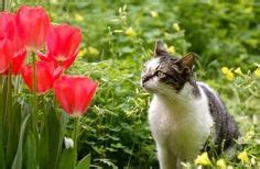 how to keep cats out of flower beds 1000 images about keeping cats out of flowers on