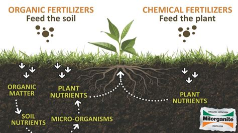 organic fertilizers  superior  chemical