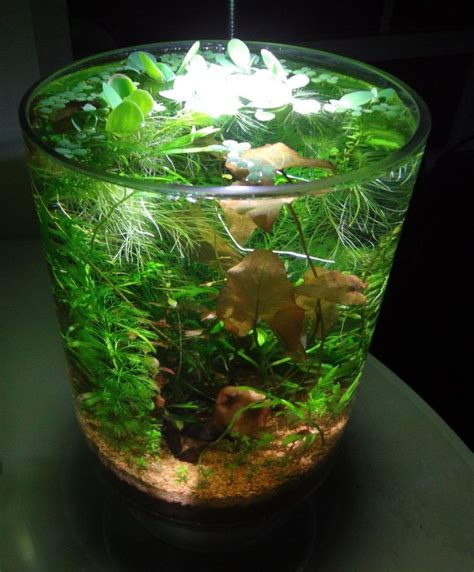 membuat aquascape nano tank 1 1g no tech planted whimsy in a vase my aquarium