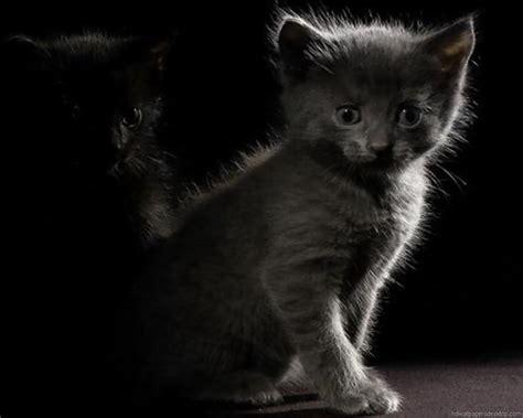 1280x1024 wallpaper cat cat wallpaper kitten wallpaper picture desktop