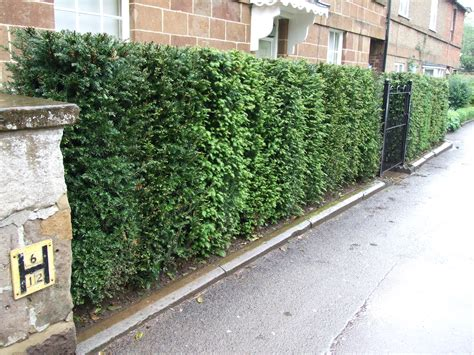 Garden Hedges Idea For Anti Pollutant House Home Garden Hedging Ideas For Gardens