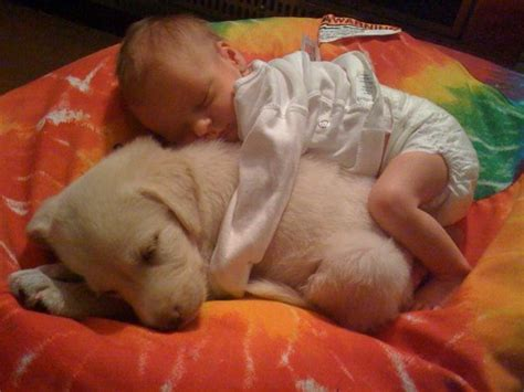 puppy sleeping with baby baby sleeping on puppy daily picks and flicks