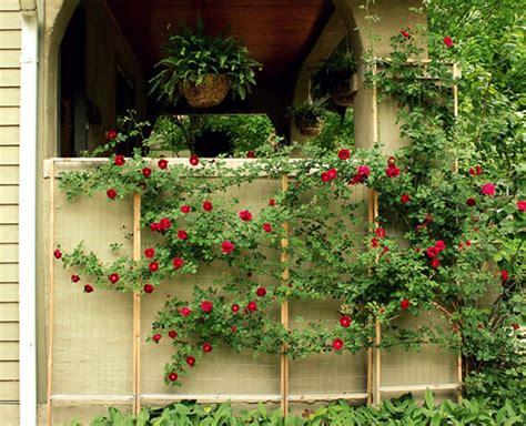 Make Your Own Trellis create your own custom trellis for climbing plants annalea hart apartment therapy