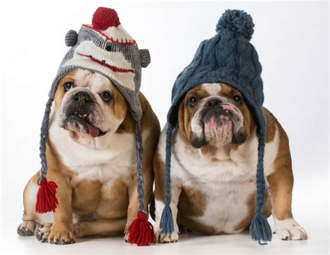 how to keep dogs warm in the winter how to keep your dogs warm all winter season mega bored