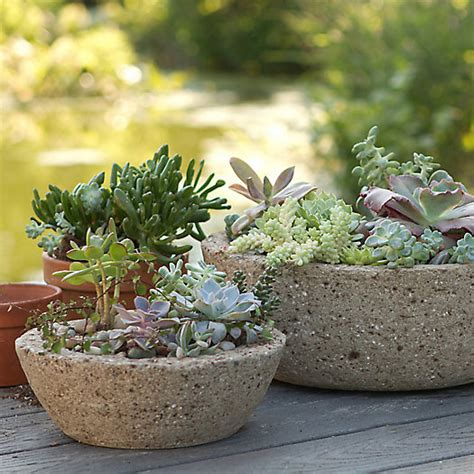 Hypertufa Planter by Low Profile Hypertufa Planter