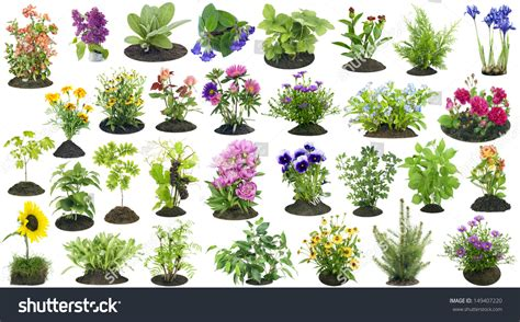 Plants For The Garden Buy Garden Plants Online For The Buy Garden Flowers