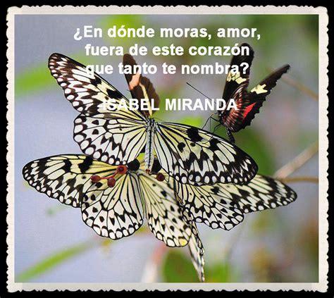 imagenes de mariposas lindas con frases im 225 genes de mariposas con frases imagui