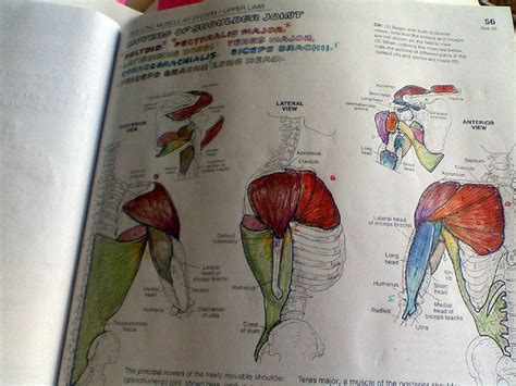 The Anatomy Coloring Book the anatomy coloring book dudeiwantthat