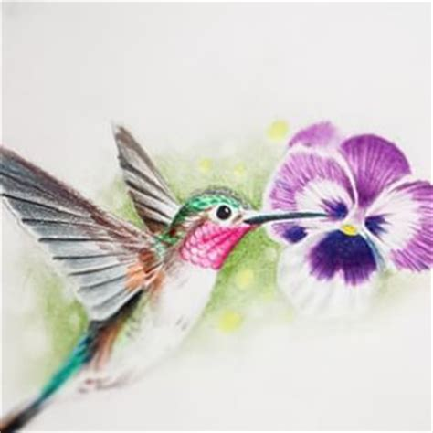 hummingbird and flower pencil drawing google search