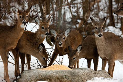 Du Deer Fit L dinner time jeff