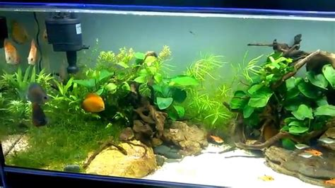 aquarium design group discus cuisine aquarium design group an aquascape of highlight