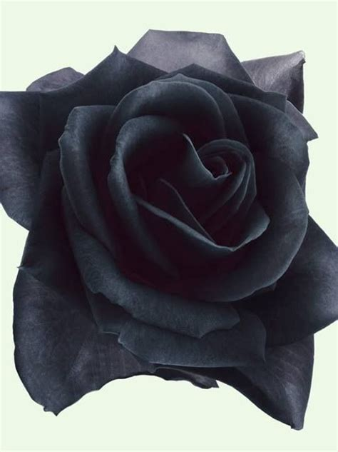 black roses black rose tattoos and rose tattoos on pinterest