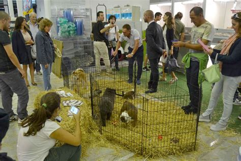 la casa degli animali casa degli animali in fiera boom di visitatori ma le
