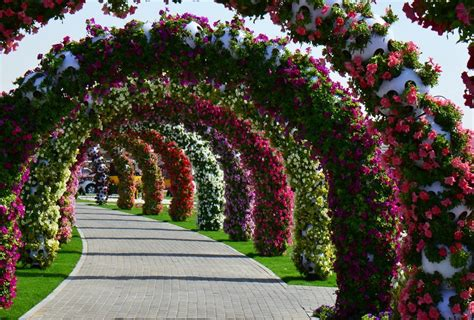 Dubai S Miracle Garden Flowers From Many Gardens
