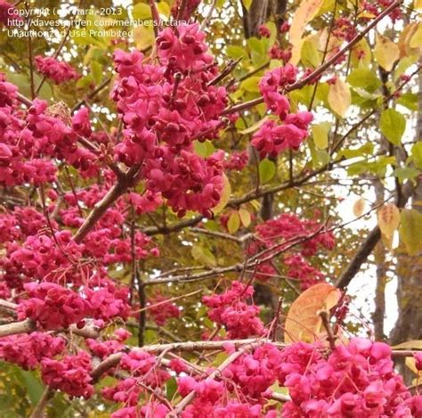 plant identification gorgeous fall blooming shrub 2