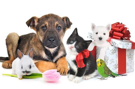 imagenes feliz navidad con perros sol monasterio 21 lecciones sobre las mascotas