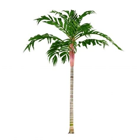 weihnachtsbaum selber schlagen ruhrgebiet best indoor palm trees 28 images best 25 indoor palm
