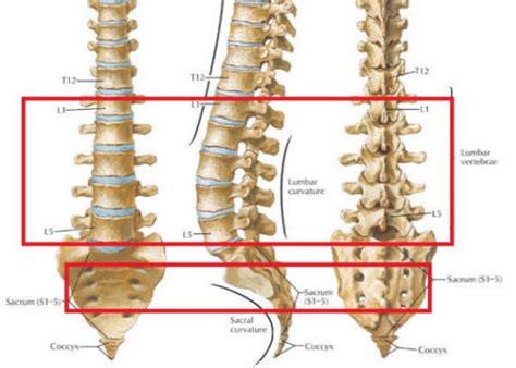 lumbar 4 and 5 diagram s1 spine location get free image about wiring diagram