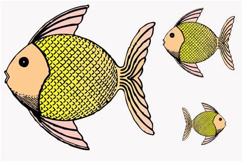 Warum Haben Fische Schuppen Kribbelbunt