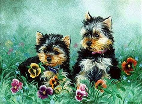 yorkie definition yorkie puppies wallpaper wallpapersafari
