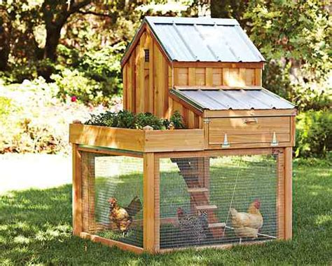 how to have chickens in your backyard how to change chicken ordinances homesteading and