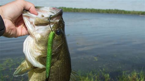bank fishing tips for spawning bass the outdoor time
