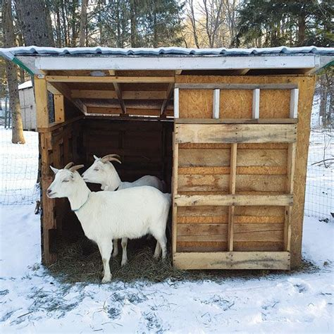 How To Build Goat Shed by 25 Best Ideas About Goat Shelter On Goat