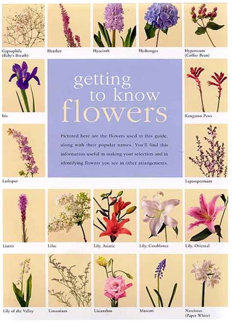 Types Of Flowers And Their Meanings by Flowers And Their Meanings New Calendar Template Site