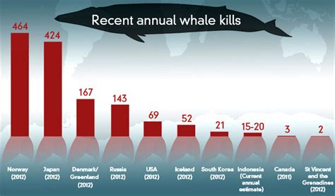 Whaling Is Still Big In Japan by Fact Check How Does Japan Compare With Other Whaling