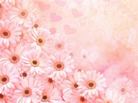 cute hd wallpaper of flowers 20 cute flower backgrounds wallpapers freecreatives