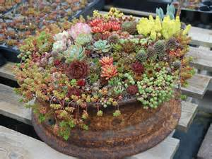 succulents container gardens how to grow and care for container succulents world of