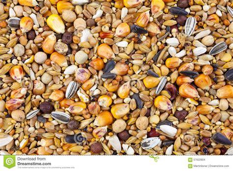 mixed bird seed close up stock photo image 57622904
