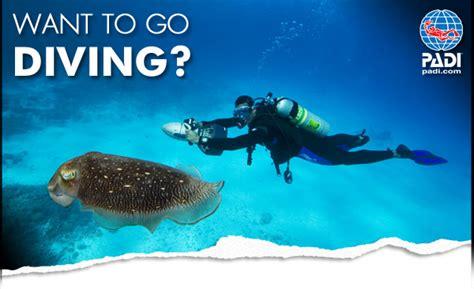 Kaos Diving Padi 2 diving guadeloupe in cousteau marine park atlantis formation