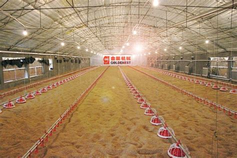poultry farm lighting system automatic plastic pan feeder feeding system for