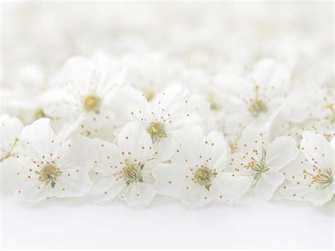 Hochzeit Hintergrundbild by Hochzeitsfloristik Blumen De Clercq Aachen