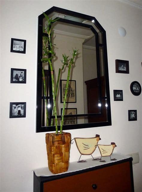 zimmerpflanze große blätter bambus zimmerpflanze onlynewsv1