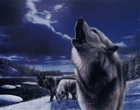 google images wolf cool wolf pictures google search wolfs pinterest
