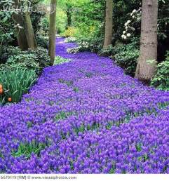 2214 Best Everything Plants And Flowers Images On Pinterest 65 Best Petals Posies And Pretty Things Images On