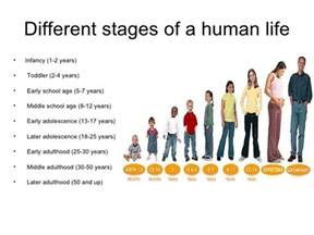 life cycles the human life cycle the seven stages