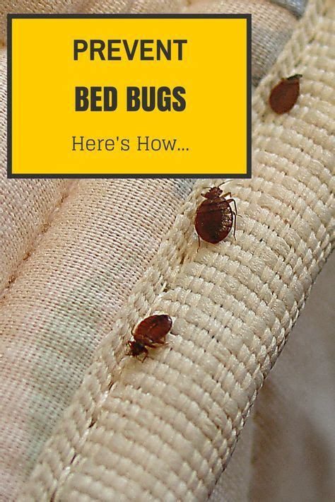 how to repel bed bugs from skin 25 best ideas about bed bugs on pinterest bed bugs