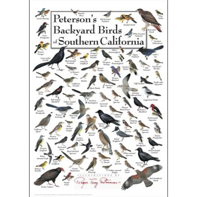 Backyard Birds Of Southern California peterson s backyard birds of southern california poster