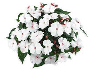 winterharte pflanzen für garten 36 wasserbedarf hoch lexikon f 252 r kr 228 uter und pflanzen