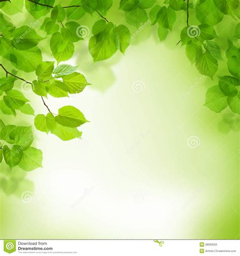 green wallpaper cheap green leaves border abstract background stock photo