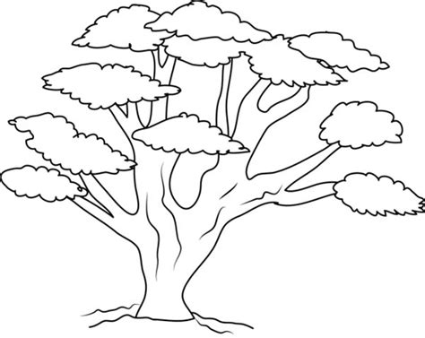 Tree Branches Printable Coloring Pages Color Trees
