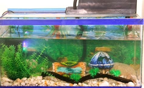 Decoration Of Aquarium by How To Decorate An Aquarium 9 Steps With Pictures Wikihow