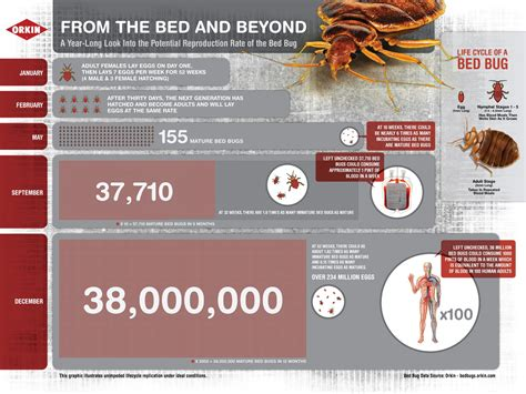 bed bug reproduction rate bed bug infographic infographics pinterest infographic