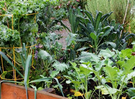 fall and winter gardening wshg net time to plant your fall and winter garden