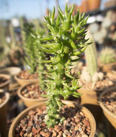 cactus archives cactus jungle
