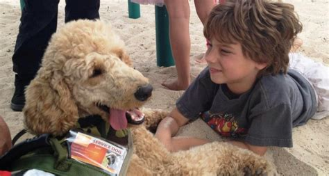 autistic puppy autism service dogs autism service